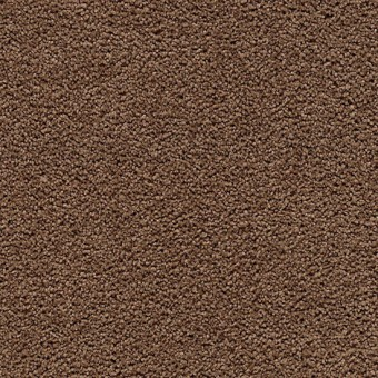 Cozy Comfort - Lush Suede From Mohawk Carpet