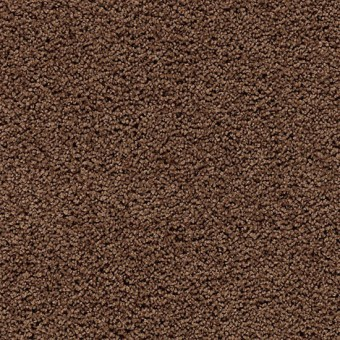 Cozy Comfort - Burnished Brown From Mohawk Carpet