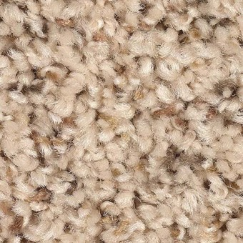 Palmetto Point (F) - 5 From Mohawk Carpet