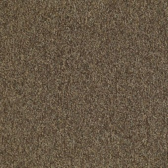 Multiplicity 18 x 36 - Exuberance From Shaw Carpet