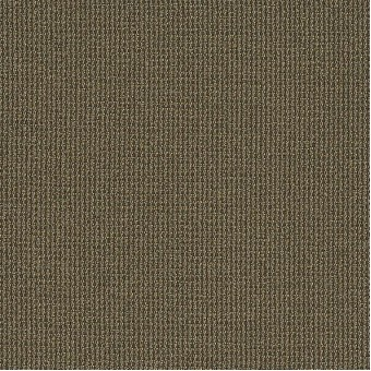 Dateline Today - Editions From Shaw Carpet