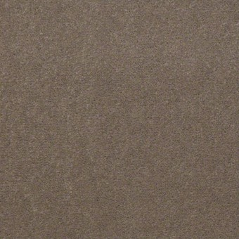 Town Hall 36 - Bashful Taupe From Showcase Collection