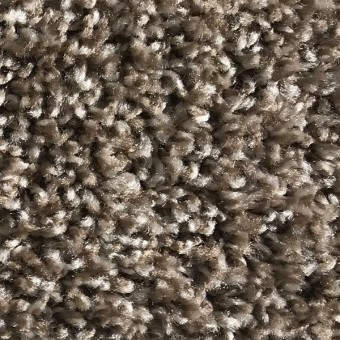 Rave - Apartment Grade Carpet - Frosted Fields From Showcase Collection