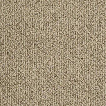 Family Tree B Shaw Carpet Save 30 50 At Carpet
