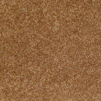Cheers to Life - Camel From Shaw Carpet