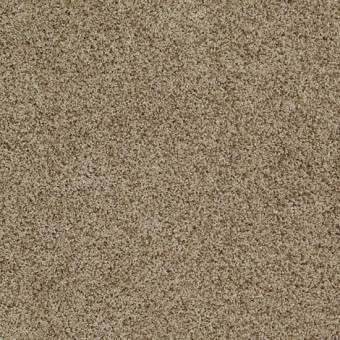 Truly Relaxed III - Twig From Shaw Carpet