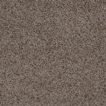 Truly Relaxed III - Flax From Shaw Carpet