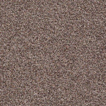 Treat Me (B) - Acorn From Shaw Carpet
