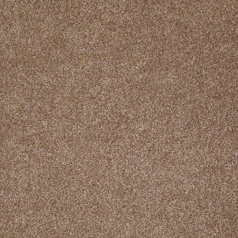That's Right - Acorn From Shaw Carpet