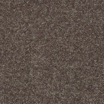 Point Guard - Driftwood From Shaw Carpet