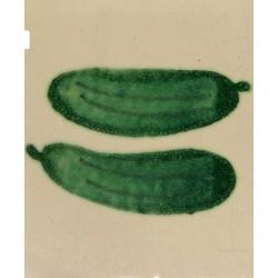 V16 Cucumber
