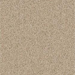 Carpet Diem