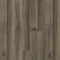 Cloudland Oak